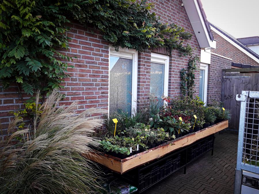 tuinplanten-van-gerards-tuinplanten